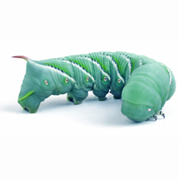 hornworms hornworms