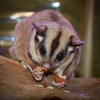 Sugar Glider Variety Feeder Package sugarkit110