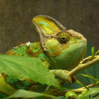 Reptile Feeder Kits - GeorgiaCrickets com - Live Feeder