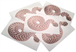 Hognose Decal aahognose