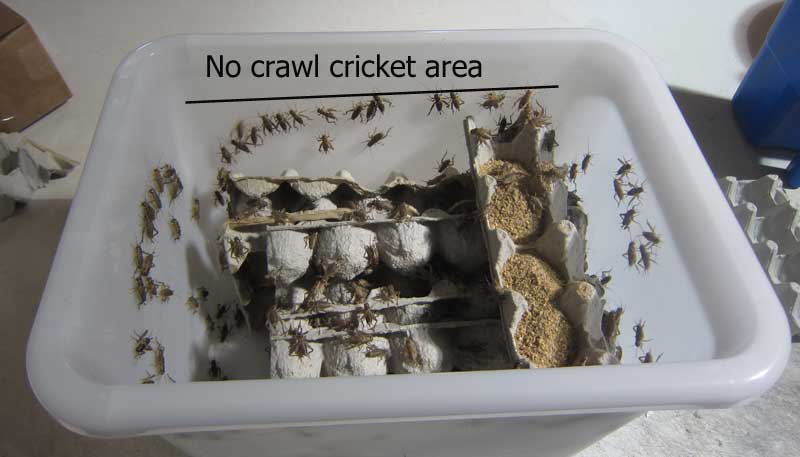 Mega Keeper with crickets